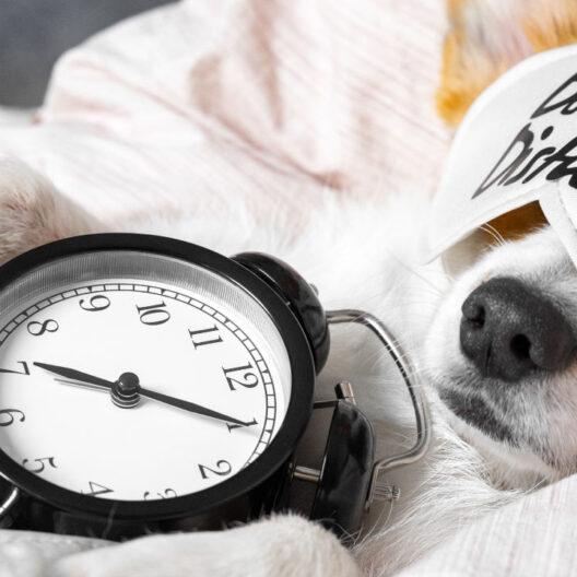 colchon perros - dormitienda